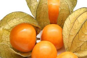 Sadnice golden berry peruanska jagode